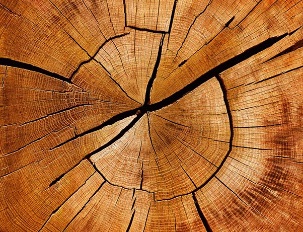 An image of a the end of a cut log.