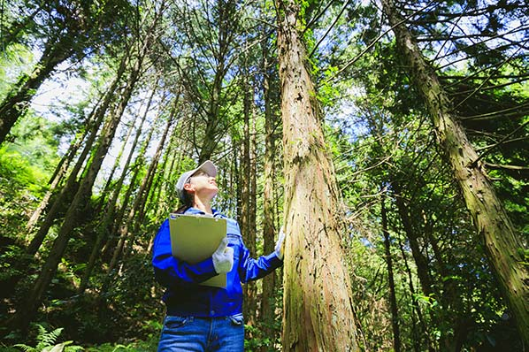 An image of person with a clipboard standing next to a tree.