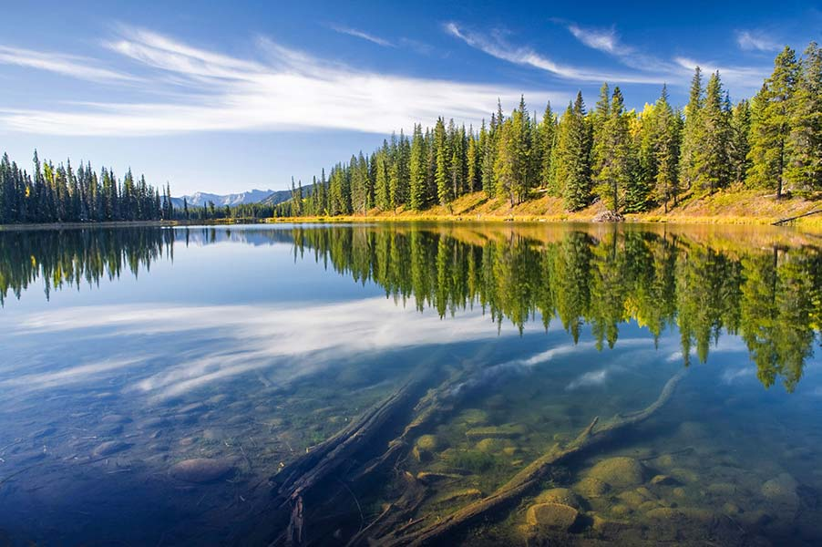 An image of a forest and lake.