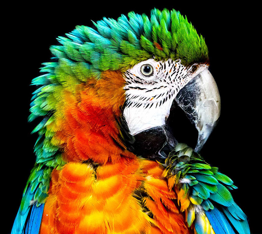 image of colorful parrot